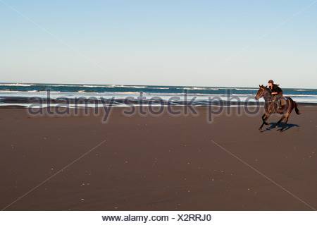 Mid adult woman riding horse on beach - Stock Photo