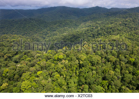 Aerial view of primary lowland tropical rainforest, Osa Peninsula, Costa Rica - Stock Photo