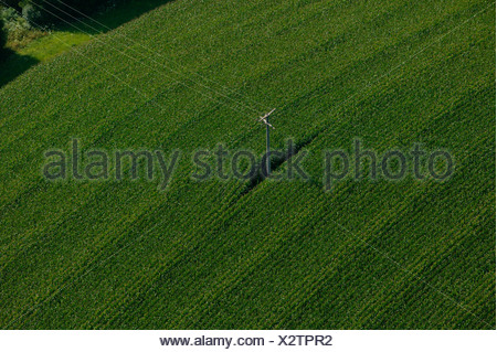 Power pole in cornfield, Lower Bavaria, Bavaria, Germany - Stock Photo