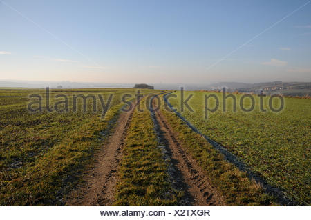 Way in the fields for tractors - Stock Photo