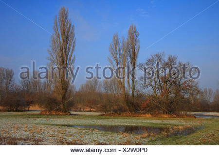 flood plain in winter, Germany, Baden-Wuerttemberg - Stock Photo