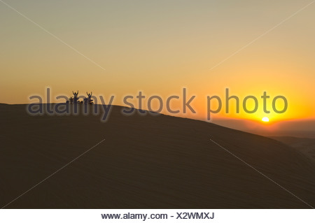 Quad bikes in desert at sunset, silhouette Stock Photo
