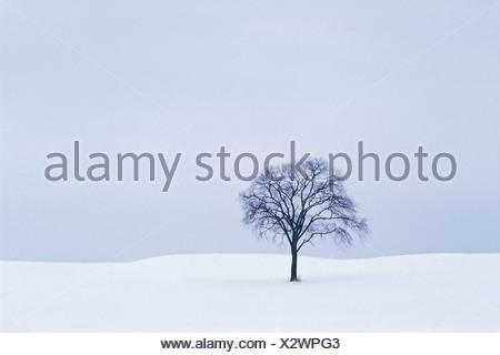 Lone Tree in Snow Covered Winter Landscape, Ottawa, Ontario, Canada - Stock Photo