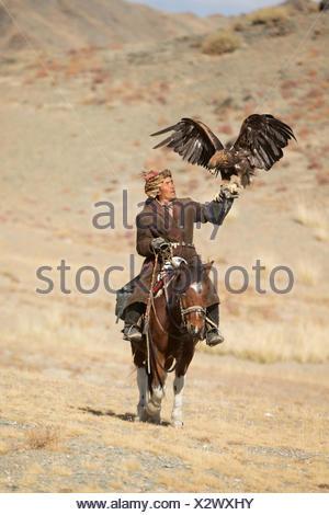 Eagle hunter mounted on Mongolian horse with his female Golden eagle (Aquila chrysaetos) at Eagle Hunters Festival, near Sagsai, Bayan-Ulgii Aymag, Mongolia. September 2014.. - Stock Photo