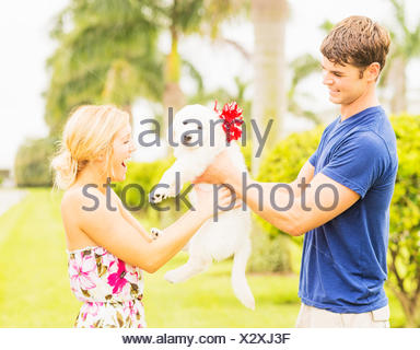 USA, Florida, Jupiter, Boyfriend giving white puppy with ribbon bow to girlfriend as present - Stock Photo