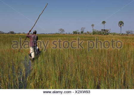 Botswana, North-west district, Okavango delta, crossing the marshes in mokoro, pirogue - Stock Photo