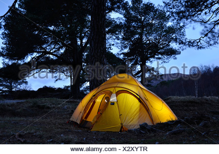 Yellow illuminated expedition tent, trekking tent, under large Caledonian Pine trees at dusk, Glen Affric, Scotland - Stock Photo