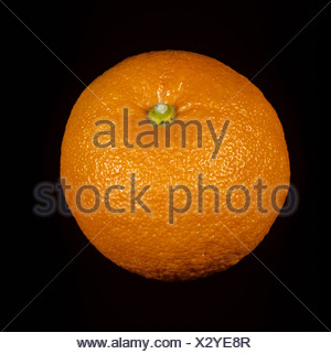 Whole fruit of bitter, sour or Seville orange (Citrus aurantium) a citrus rootstock - Stock Photo
