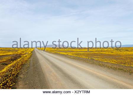 Yellow Brown Road leading to Tankwa Karoo - Stock Photo