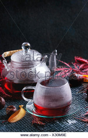 Autumn red hibiscus tea in glass cup and teapot standing on dark wet texture background with fall maple leaves and chestnuts. Sp - Stock Photo