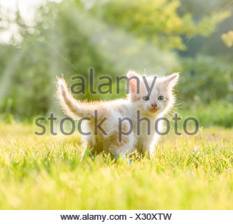 little kittens - Stock Photo