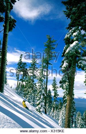 Offpiste snowboarder on slope in mountain woodland, Richard Stretch, Homewood, Tahoe - Stock Photo