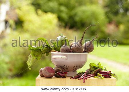 A colander with beetroot being prepared - Stock Photo