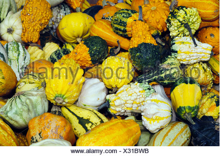 large quantity of various decorative gourds - Stock Photo