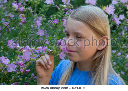 hollyhock mallow, large-flowered mallow, pink mallow, vervian cheeseweed (Malva alcea), girl smelling at mallow blossoms, Germany - Stock Photo