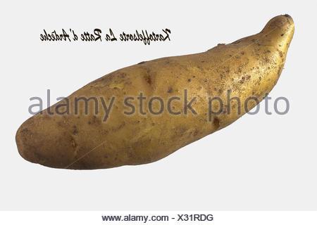 Ratte Potato, Cut-out - Stock Photo