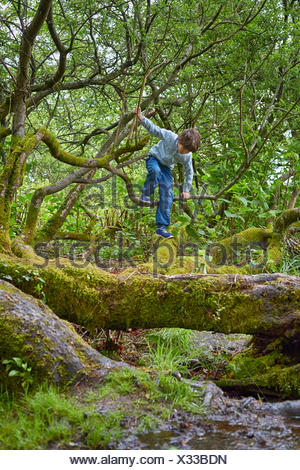 Boy climbing on trees in woods - Stock Photo