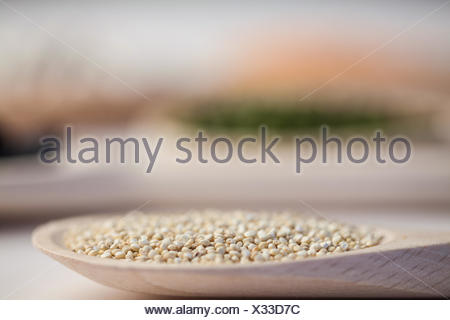 Wooden spoon of sesame seeds - Stock Photo