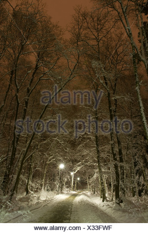 View of empty country road along trees on a chilly winter night - Stock Photo