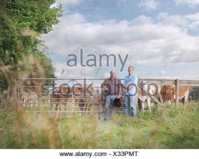 Farmer and son with Guernsey calves - Stock Photo