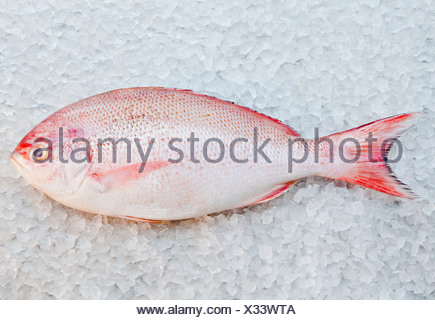 Close up of red snapper fish on ice bed - Stock Photo