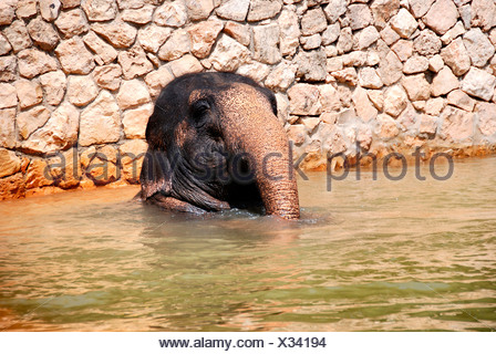 Baby Elephant in the water - Stock Photo