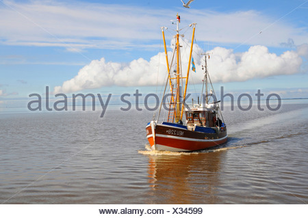 fishing cutter coming home to the harbour of Neuharlingersiel after fishing, Germany, Lower Saxony, Neuharlingersiel - Stock Photo