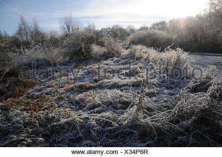 Herbs in winter - Stock Photo