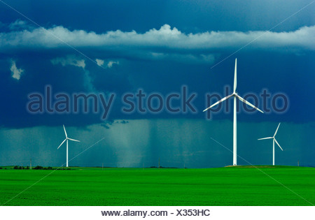 Wind turbines operate in an early growth wheat field with dark storm clouds above and a rain storm in the background / Canada. - Stock Photo