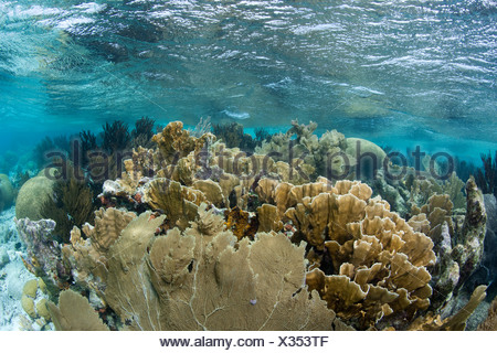 View of a reef top in the shallow waters near Klein Bonaire. - Stock Photo
