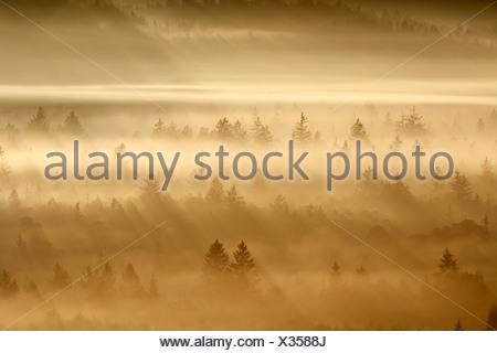 Germany, Bavaria, Upper Bavaria, View of pupplinger au near wolfratshausen in morning - Stock Photo