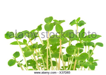 flower, plant, flowers, germination, growth, grow, plants, seedlings, close, - Stock Photo