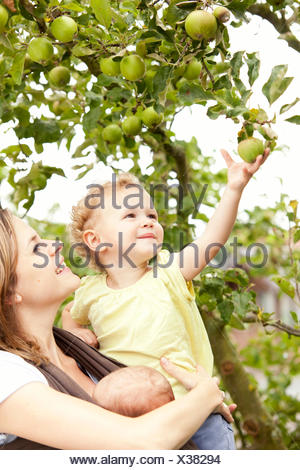 Little girl picking an apple from tree with mothers help - Stock Photo