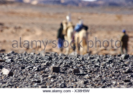 hot shimmering air blurring a camel caravane - Stock Photo