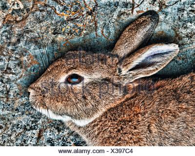 Close up of rabbit's face