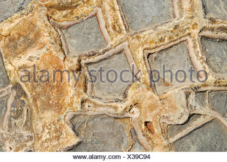 Surface of a boulder, detailed view, Moeraki Boulders, a geological rock formation, Moeraki, East Coast, South Island - Stock Photo