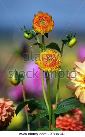 colourful gorgeous - Stock Photo