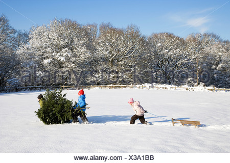 Children pulling Christmas tree - Stock Photo