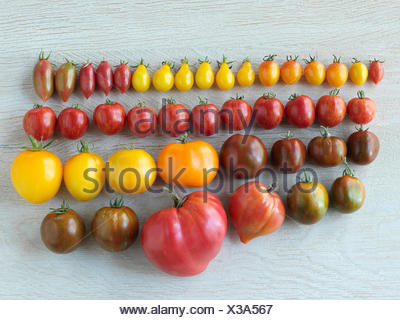 Variety of multicolor organic heirloom tomatoes in a row - Stock Photo