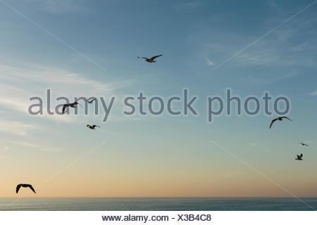 Birds flying against blue sky at sunset - Stock Photo