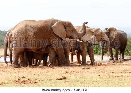 Hellooooo Elephant - Stock Photo