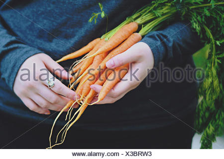 United Kingdom, England, Warwickshire, Stratford-upon-Avon, Young woman holding home grown carrots in hands - Stock Photo