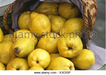 Basket, quinces, Cydonia oblonga, fruit, fruits, autumn fruits, pomes, pear quinces, nutrition healthy, rich in vitamins, freshly, harvest-freshly, harvest, quince harvest, Still life, product photography, - Stock Photo