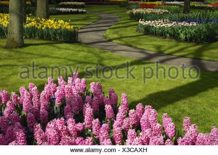 Jacinthe (Hyacinthus orientalis), park with flowerbeds and lawns, Netherlands, Keukenhof - Stock Photo