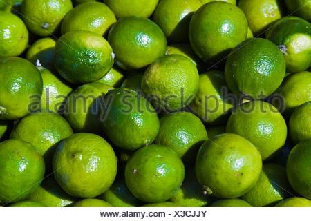Limes (Citrus × aurantiifolia) - Stock Photo