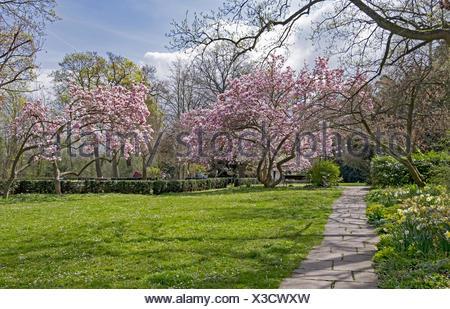spring - Stock Photo