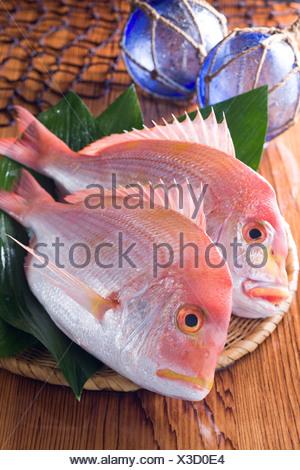 Yellowback Sea Bream - Stock Photo