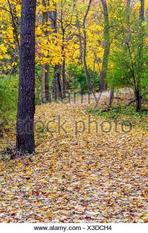 USA, Illinois, DuPage County, Oak Brook, Woodland path in autumn - Stock Photo