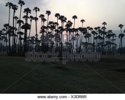 India, Andhra Pradesh, Sunset - Stock Photo