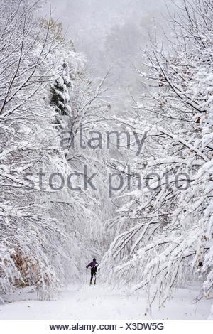 A lone X-Country skier disappearing into snow covered trees on Rte. 108, Stowe, Vermont, USA. - Stock Photo